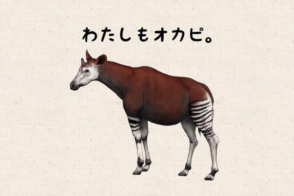 okapi02